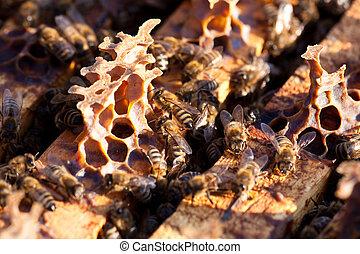 poco, tiempo, abejas, temprano, primavera