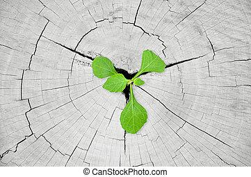 poco, tocón, planta de semillero, árbol, verde, crecer
