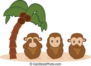 poco, tres, monos