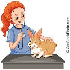 poco, veterinario, examinar, conejito