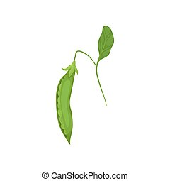 Pod of ripe green peas hanging on thin stalk with leaf. Natural and healthy food. Organic product. Flat vector design