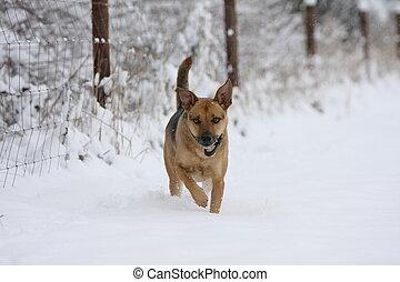 Podenco-Shepherd-Mix in snow