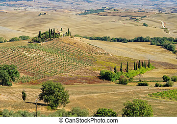 Podere in fall 20