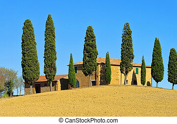 Podere in fall 23