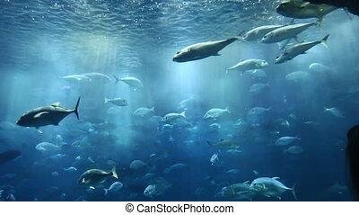 podwodny, fish, kobieta, akwarium, oglądając