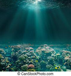 podwodny, koral, ocean, wodne łóżko, morze, prospekt., albo, reef.