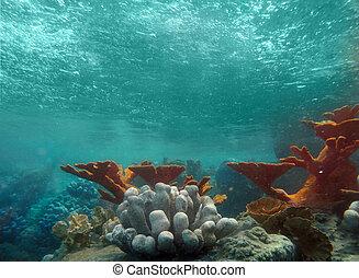 podwodny, lekki, ocean, przez, fale, prospekt, lustrzany