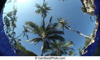 podwodny, niezwykły, kałuża, drzewa., niebo, skutek, woda, ...