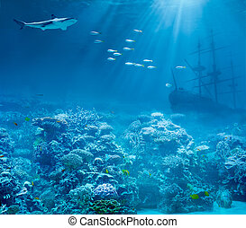 podwodny, rekin, ocean, zatopiony, skarby, morze, statek,...