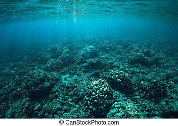 podwodny, słońce, scena, tropikalny, morze, korale, cichy, rays.