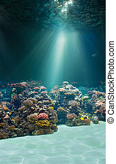 podwodny, wodne łóżko, albo, morze, ocean