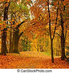 podzim, údolí