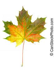 podzim, #2, barvy