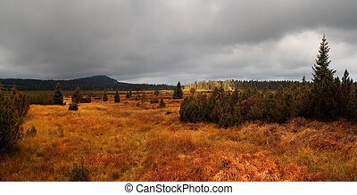 podzim, bohémský, slatina, velký, travnatý, močál, les, louky, rašelina, krajina, kopyto, čech, jezero, -, republika