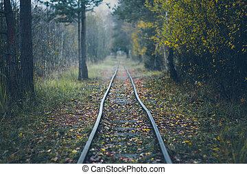 podzim, -, dráha, omezený, les, spílat, odhadnout