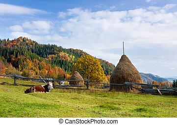 podzim, krmivo, krajina, kráva