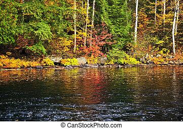 podzim, les, a, jezero podpěra