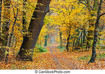 podzim, od park