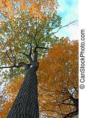podzim, perspektivní