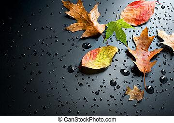 podzim, pojem