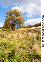 podzim, strom, louka