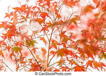 podzim, velmi, slabý ohnisko, list
