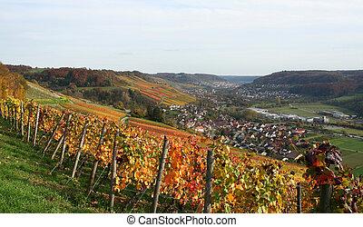 podzim, vinice, scenérie