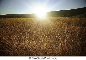 podzim, západ slunce, večer, bojiště