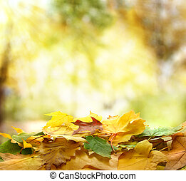podzim zapomenout, les