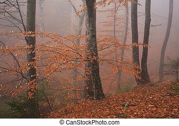 podzim, zlatý, mlha, les