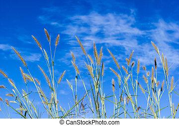 pohár, kivirul, noha, világos, kék ég