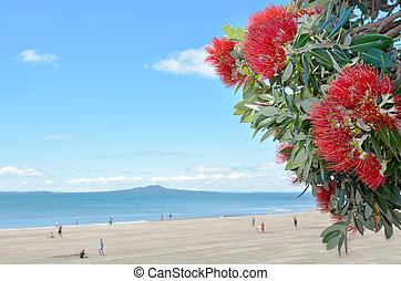pohutukawa, fleurs rouges, fleur, dans, décembre