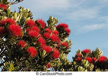 pohutukawa flowers against blue sky