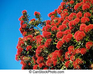 Pohutukawa tree in full flower.