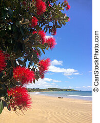 Pohutukawa red flowers blossom on December - Pohutukawa red...