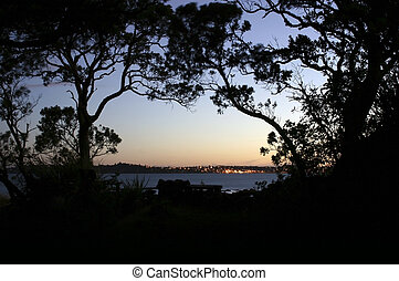 Pohutukawa trees silhouetted at evening on Rangitoto Island, New Zealand. Auckland City in distance.