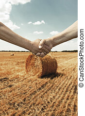 poignée main, blé, agriculteurs, champ, temps, récolte