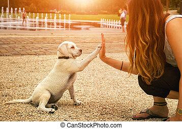 poignée main, femme, labrador, donner, jeune, haut cinq, chiot