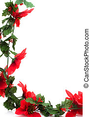 Poinsettia Border - Poinsettia flowers making a border with...