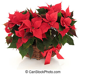 Poinsettia Flower Arrangement - Poinsettia flower...