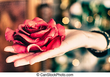 Poinsettia in a Woman's Hand