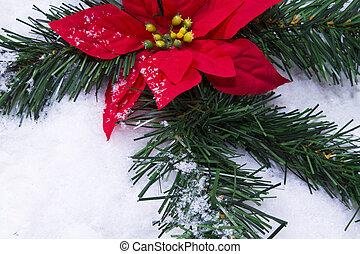 poinsettia in the snow