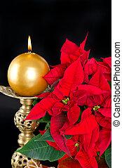 poinsettia., piros, karácsony, virág, noha, arany-, gyertya