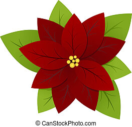 Poinsettia - symbol of christmas isolated on a white...
