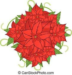 poinsettia vector flower 2