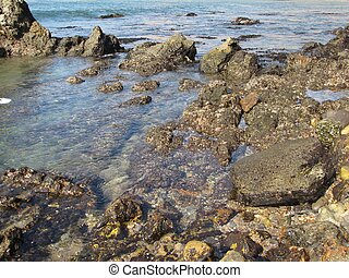 Point Vicente Tidepool