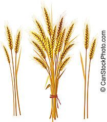 pointe, de, blé