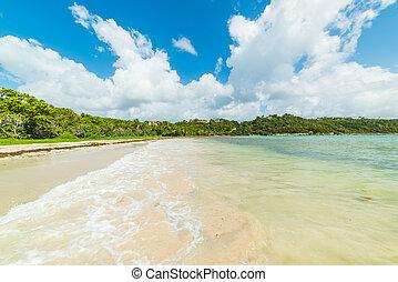 Pointe de la Saline beach on a sunny day in Guadeloupe
