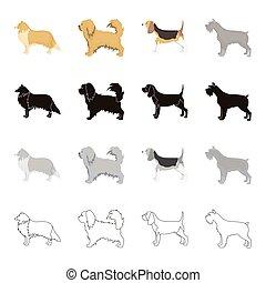 Pointer, dog collie, scottish shepherd, riesen schnauzer,...