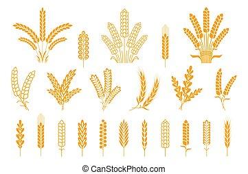 pointes, blé, avoine, héraldique, seigle, isolé, collection, grains, bière, vecteur, tige, orge, ears., riz, logo., éléments, pain